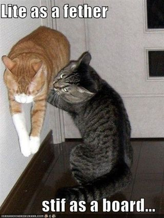 Funny-pictures-cat-is-light-as-a-feather